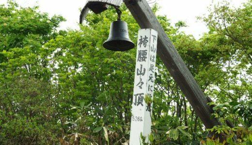 袴腰山(三条市)にヒメサユリ調査