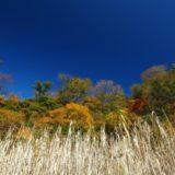 秋の萱峠から長工新道を歩く