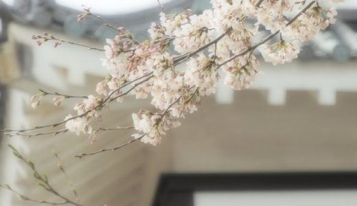 桜咲く悠久山へ花見