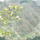 長岡市の里山【風谷山】へ行ってきました