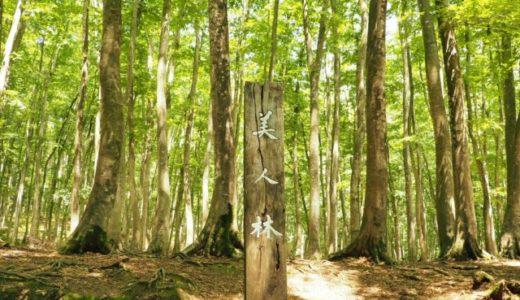 ブナ林に感動 十日町の「美人林」に行ってきた