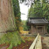 長岡市のパワースポット【蓮花寺の大杉】へ行ってきました!