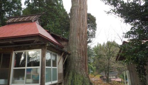 出雲崎町【三島神社の大杉】