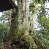 五泉市の神木「館之内の大杉」を見てきました