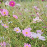 10月の山歩き(三ノ峠山で花見)