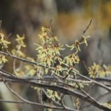 春が近い3月の三ノ峠山